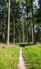 footpath leading through the forest