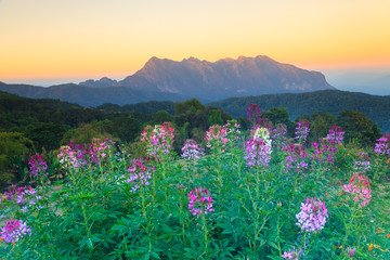 Exotic summer sunset and the mountains (Doi Chiang Dao) with flo