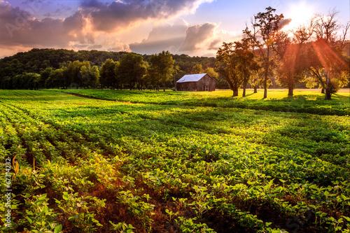 Foto op Plexiglas Cultuur Rural scene