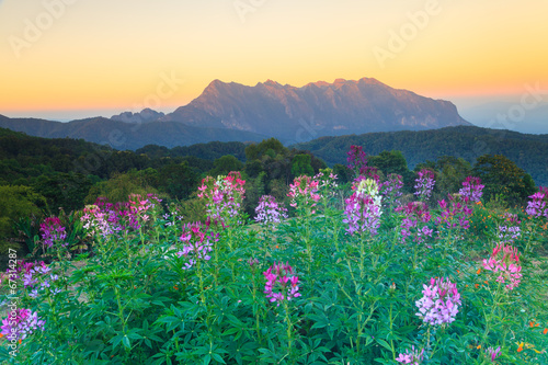 Fototapeta Exotic summer sunset and the mountains (Doi Chiang Dao) with flo