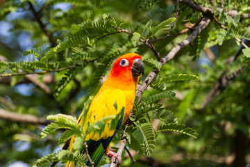 Beautiful Colors Parrot Birds
