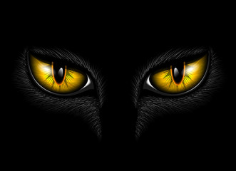 yellow cat's eye