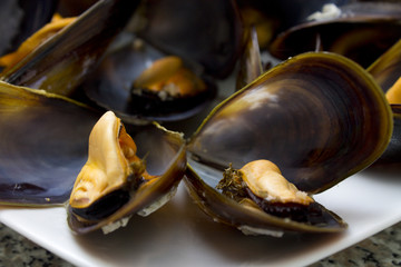 mussels isolated