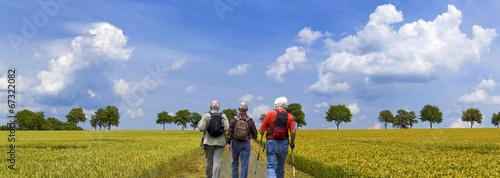 Wanderer auf den Weg durchs Kornfeld - 67322082