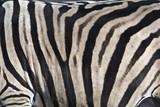 Zebra Fell