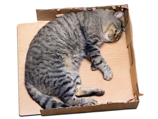 cat sleeping in a cardboard box