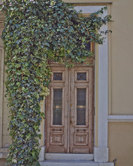 house wooden door and ivy plant, Athens Greece