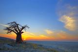 Lone Baobab sunset - 67326814
