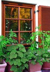 Landhaus mit Grünpflanzen