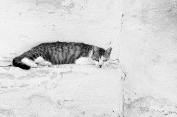 Cat relaxing on the wall in black and white