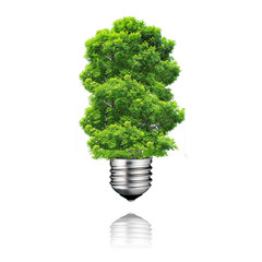 go green eco energy concept,plant light bulb