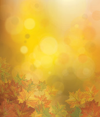 Vector autumnal leaves on bokeh background.