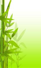bamboo, composizione, foglie