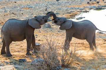 Young Elephants Greeting