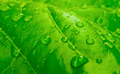 lively leaf with freshness dew