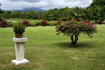 garden in  beau plan