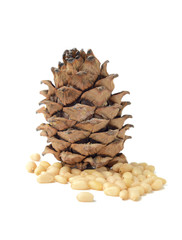 Siberian pine cone with nuts isolated on white background.