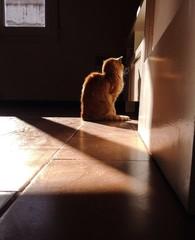Gato calentandose al sol