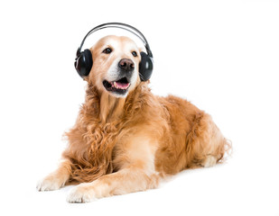 dog in headset
