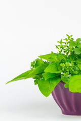 Herbs arranged in a bowl, basil, oregano and thyme