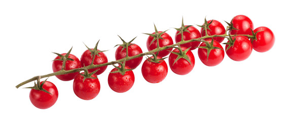 Cherry tomatoes on branch with water drops isolated