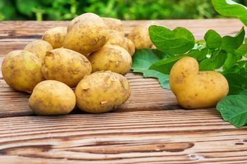 Kartoffeln, frisch geerntet