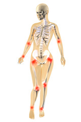 Weibliche Anatomie - Gelenkschmerzen