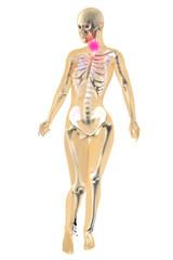 Weibliche Anatomie - Halsschmerzen