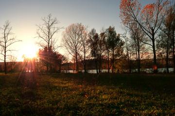 Herbst am Donauufer