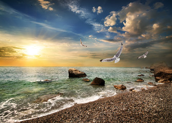 Seagull over sea