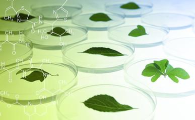 Leaves in Petri Dish