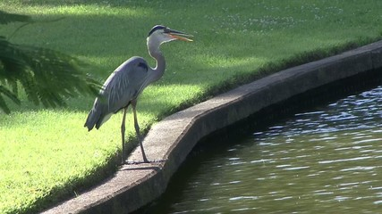 Heron on the edge of a canal