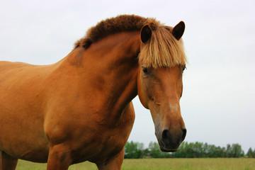 Портрет лошади на лугу в пасмурный день