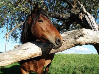 Портрет лошади с деревом на лугу
