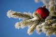 rote weihnachtskugel eingeschneit nadelbaum winter nahaufnahme