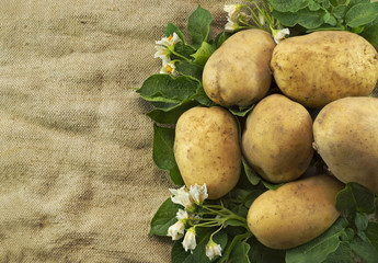 Potatoes pile on burlap sack background