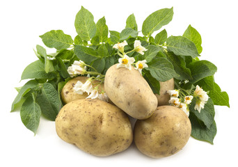 Potatoes with leaves and flowers isolated