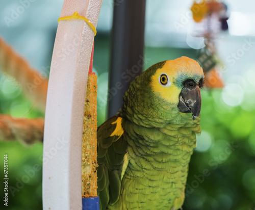 Foto op Plexiglas Papegaai Green parrot
