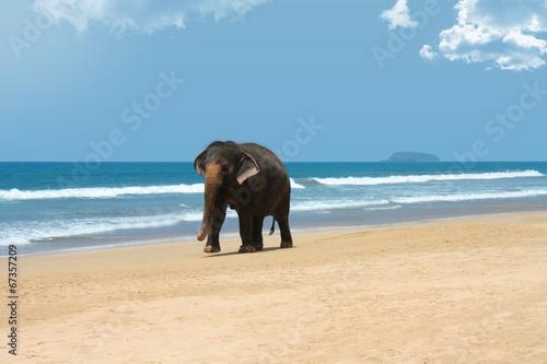 canvas print picture Elefant am Meer