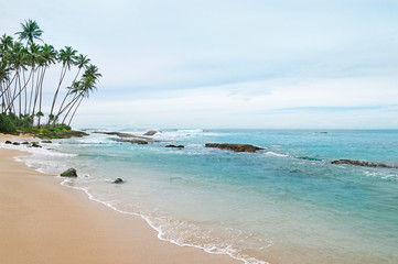 ocean and coconut palms on the shore