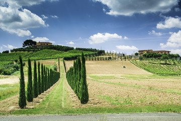 Vineyards and farm road in Italy