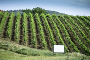 Vine plantations in Italy