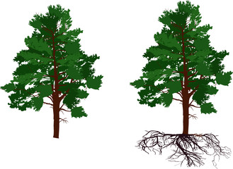 green pine tree with and without root on white