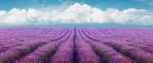 Lavender field on a background of clouds