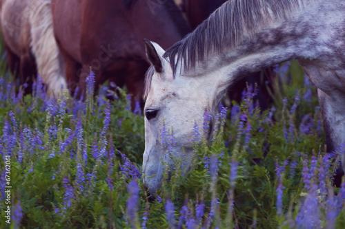 Horses eat a grass at sunrise © Shchipkova Elena