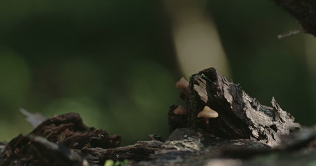 Three small moss on the tree trunk 4K FS700 Odyssey 7Q