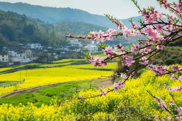 Rape flowers and Chinese ancient buildings in Wuyuan, China