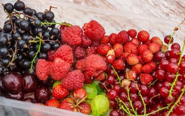 Gartenfrüchte der Saison