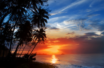 Palm trees silhouette and a sunset over the sea
