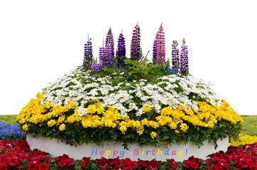 Blumenbeet zum Geburtstag vor weißem Hintergrund